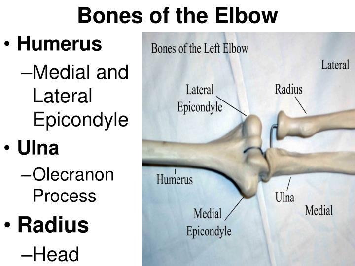 Ppt Elbow Anatomy Powerpoint Presentation Id6255483
