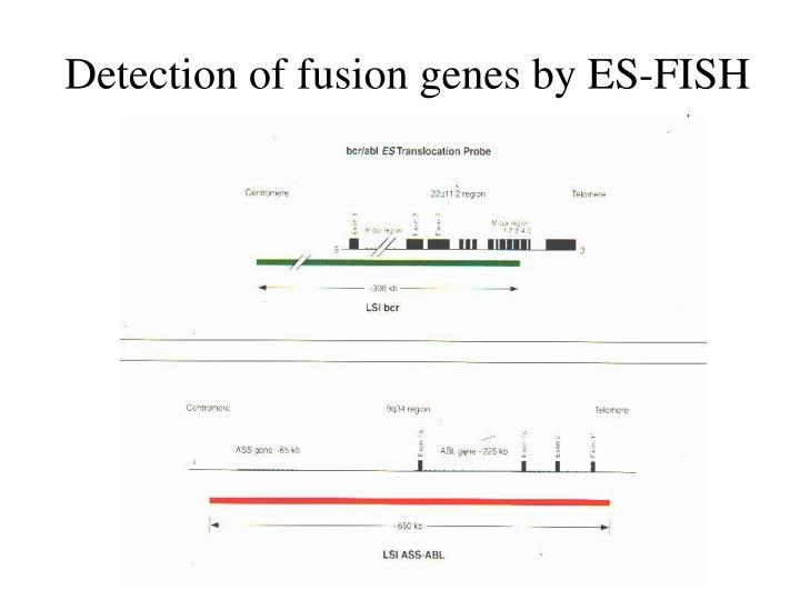 Detection of fusion genes by ES-FISH