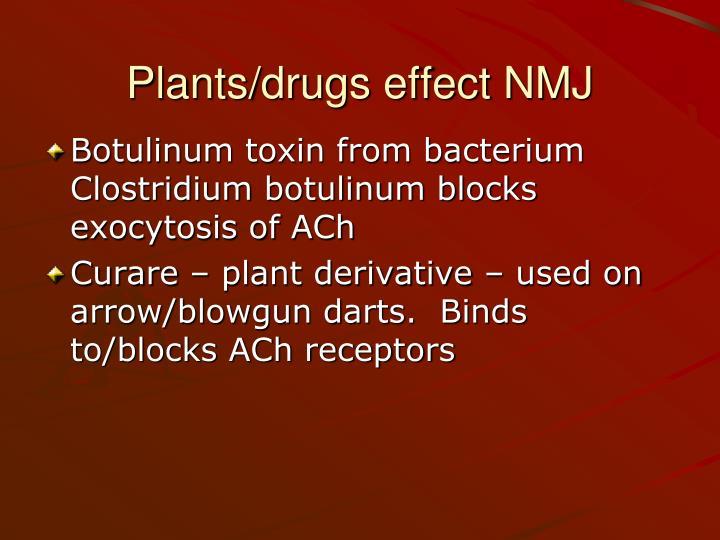 Plants/drugs effect NMJ