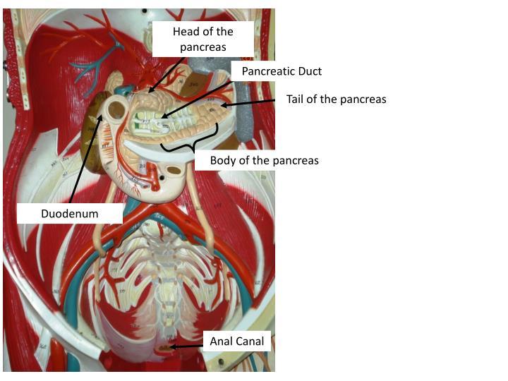 Head of the pancreas