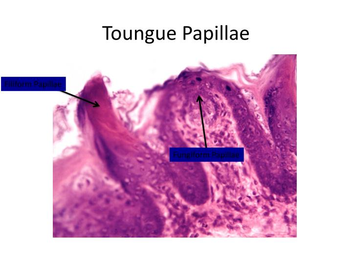 Toungue Papillae