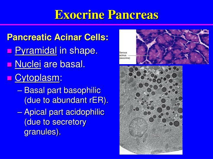 Ppt Pancreas Powerpoint Presentation Id6257952