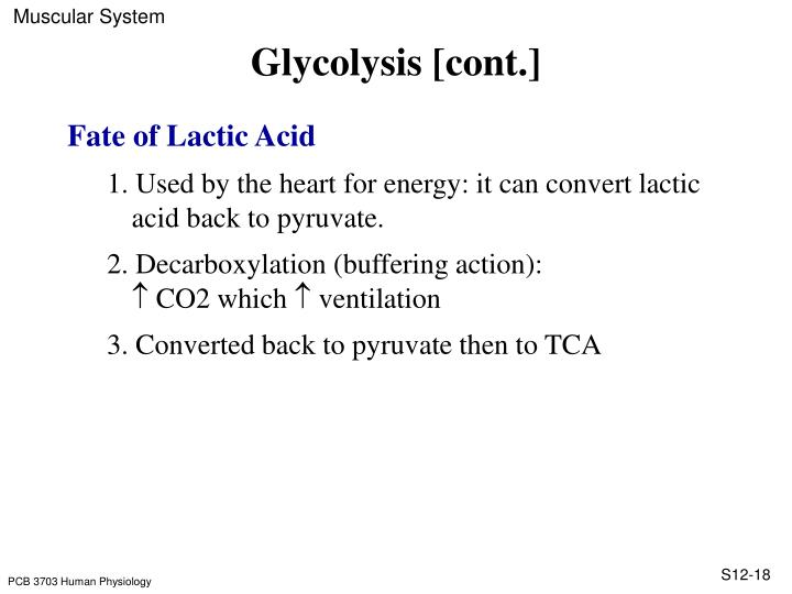 Glycolysis [cont.]