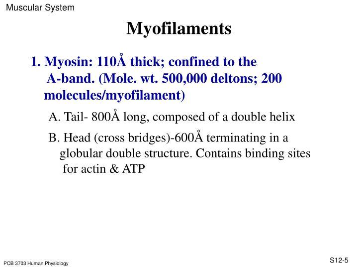Myofilaments