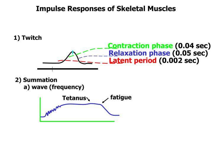 Impulse Responses of Skeletal Muscles