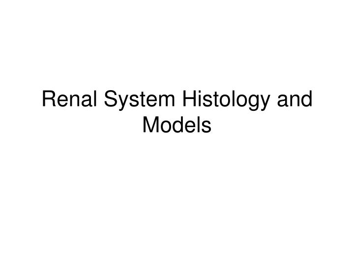 renal system histology and models n.
