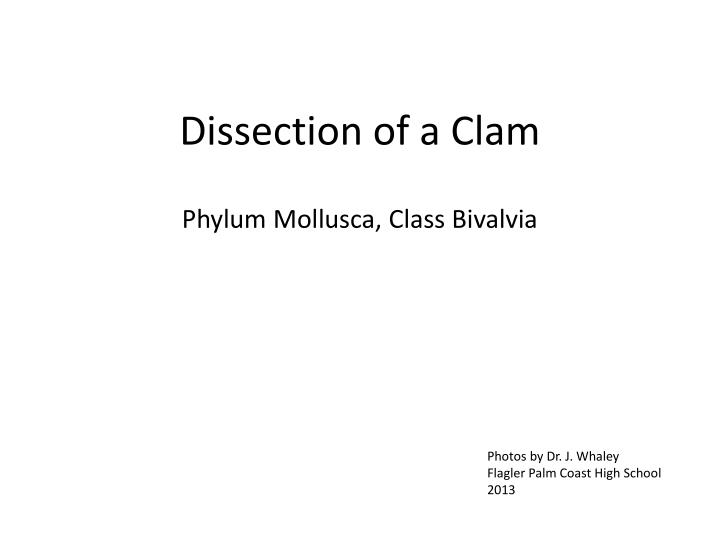 PPT - Dissection of a Clam PowerPoint Presentation - ID:6258599