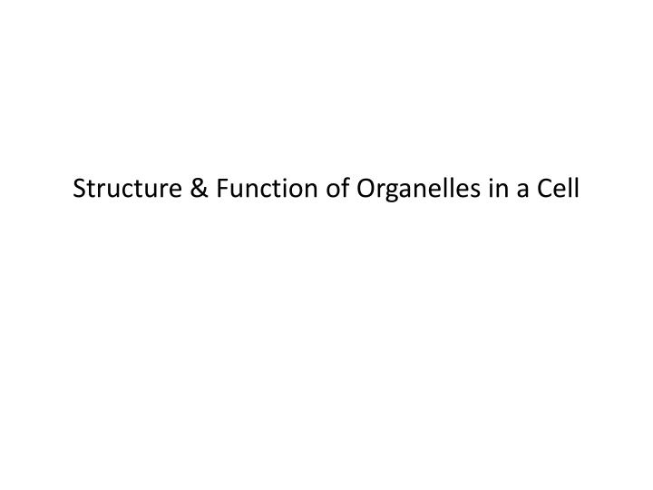 structure function of organelles in a cell n.