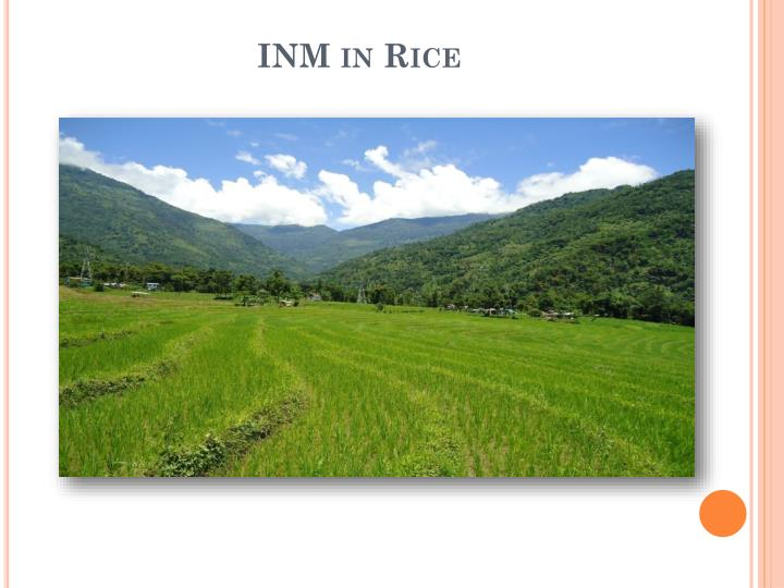 INM in Rice