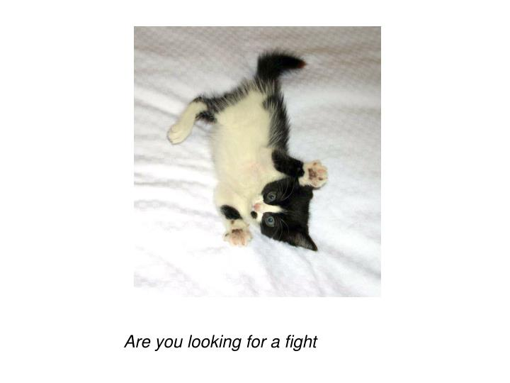 Are you looking for a fight