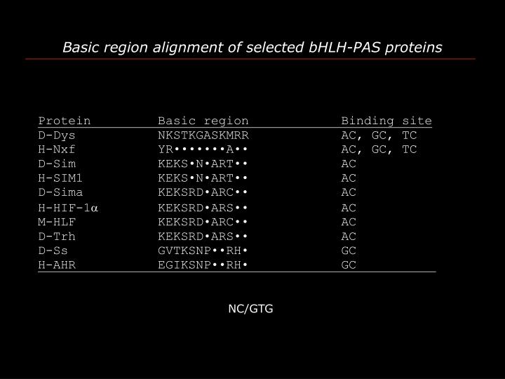 Basic region alignment of selected bHLH-PAS proteins