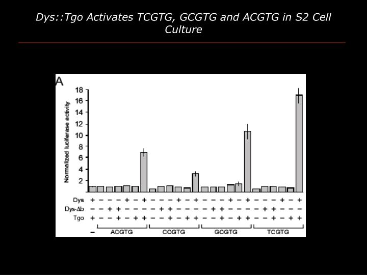 Dys::Tgo Activates TCGTG, GCGTG and ACGTG in S2 Cell Culture