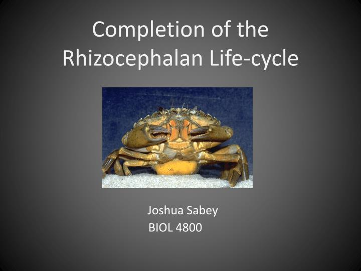 completion of the rhizocephalan life cycle n.