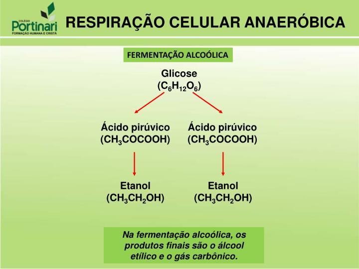 PPT - Metabolismo Celular PowerPoint Presentation - ID:6263022
