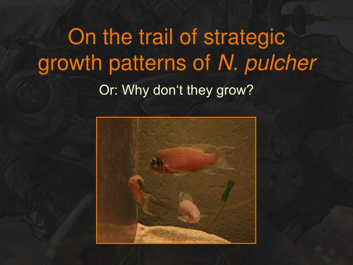 on the trail of strategic growth patterns of n pulcher n.