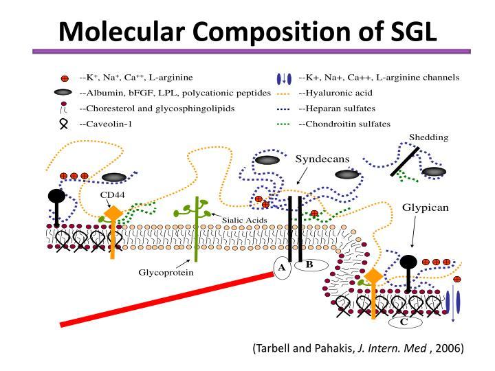 Molecular Composition of SGL