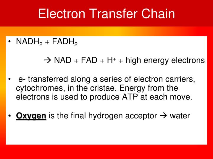 Electron Transfer Chain