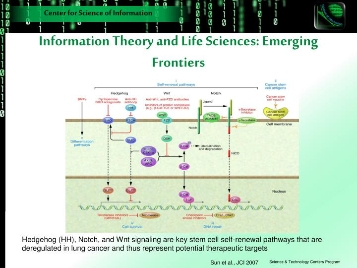 Information Theory and Life Sciences: Emerging Frontiers