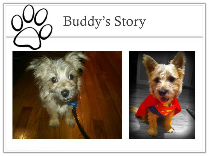 Buddy s story