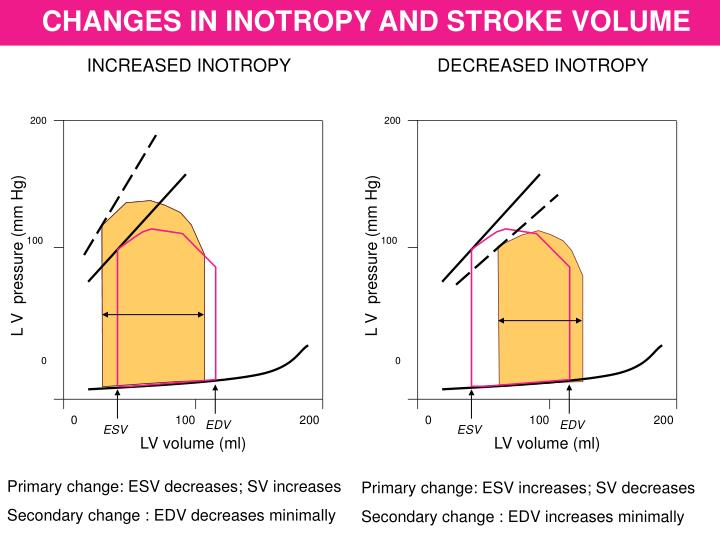 CHANGES IN INOTROPY AND STROKE VOLUME