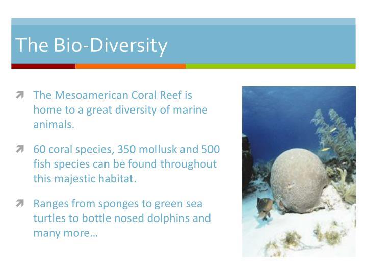 The bio diversity