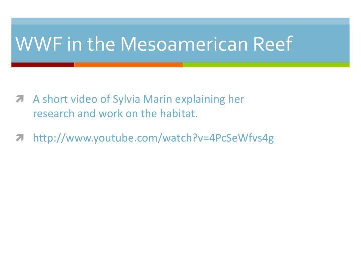 WWF in the Mesoamerican Reef