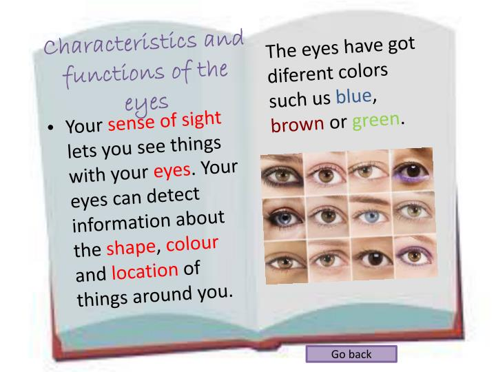 Characteristics and functions of the eyes