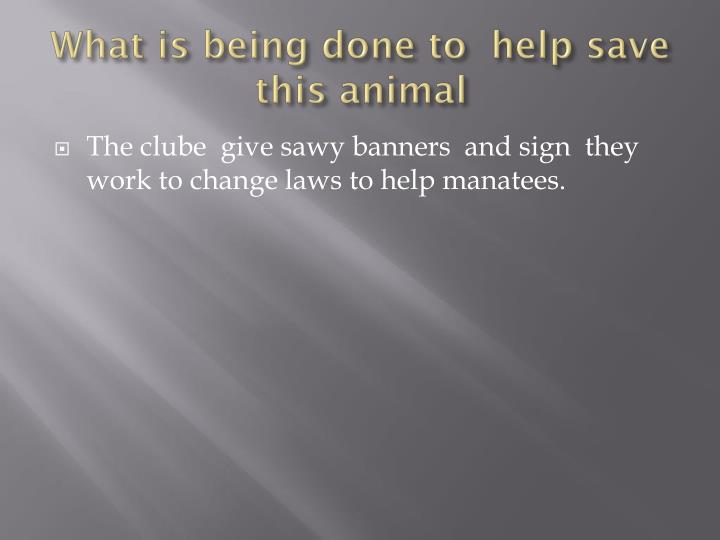 What is being done to  help save this animal