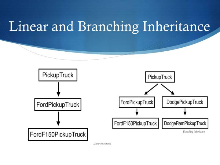 Linear and Branching Inheritance