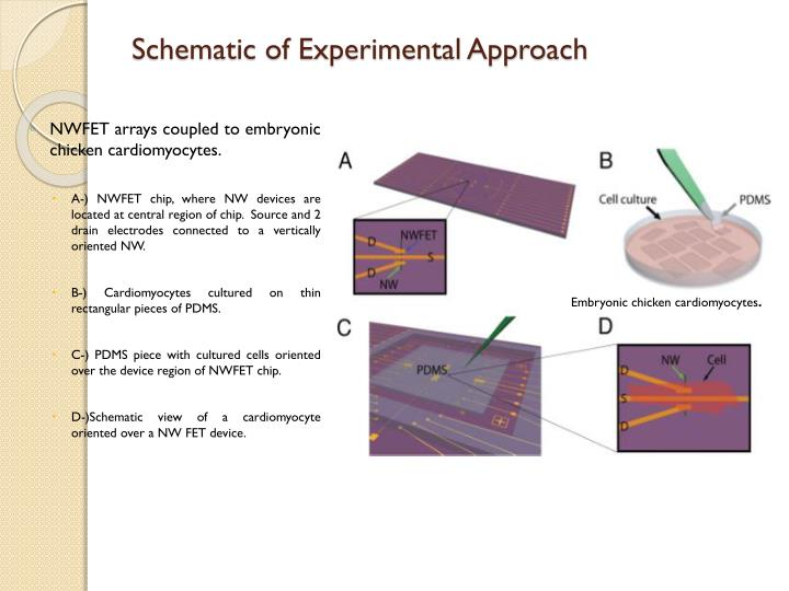 Schematic of Experimental Approach