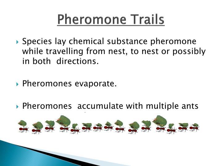 Pheromone Trails