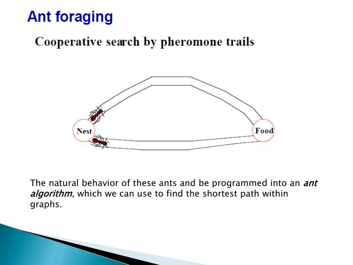The natural behavior of these ants and be programmed into an