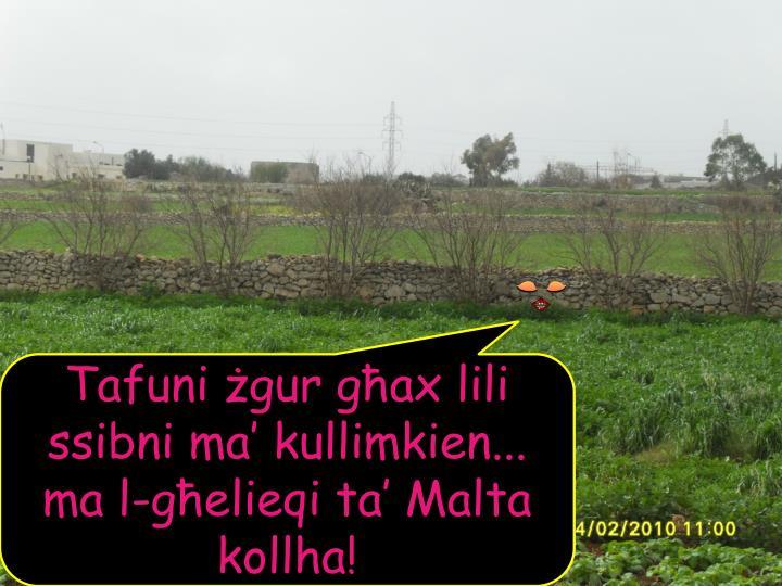 Tafuni żgur għax lili ssibni ma' kullimkien... ma l-għelieqi ta' Malta kollha!
