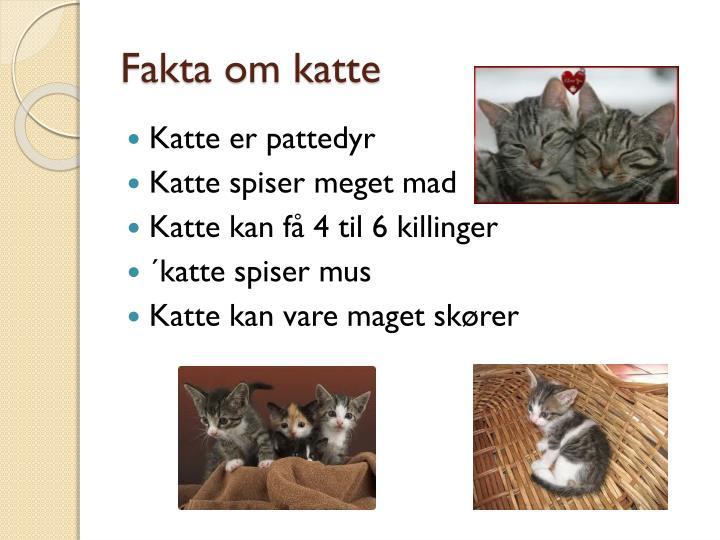 fakta om katte