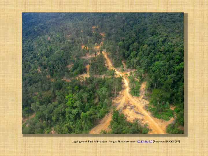 Logging road, East