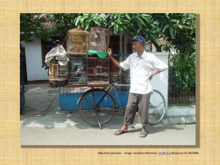 Bike bird salesman