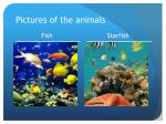 pictures of the animals