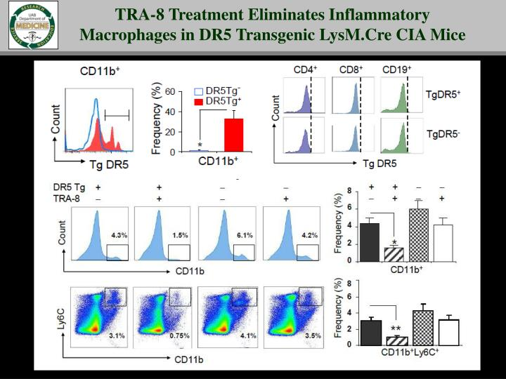 TRA-8 Treatment Eliminates Inflammatory Macrophages in DR5 Transgenic LysM.Cre CIA Mice