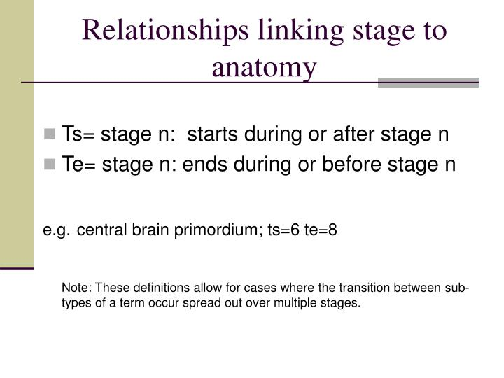 Relationships linking stage to anatomy