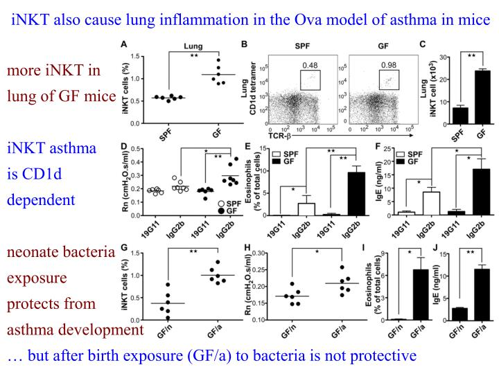 iNKT also cause lung inflammation in the Ova model of asthma in mice