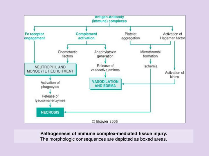 Pathogenesis of immune complex-mediated tissue injury.