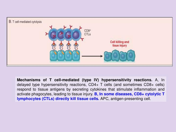 Mechanisms of T cell-mediated (type IV) hypersensitivity reactions.