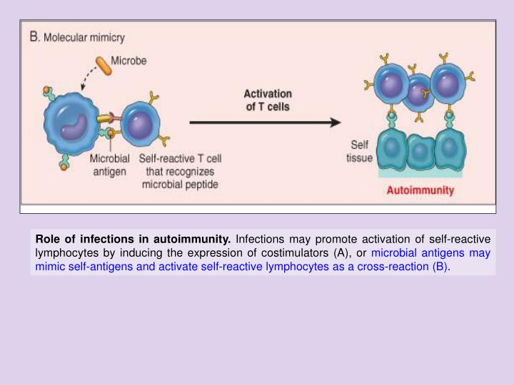 Role of infections in autoimmunity.