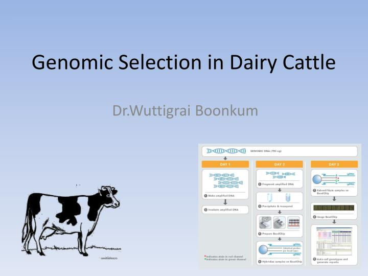 genomic selection in dairy cattle n.