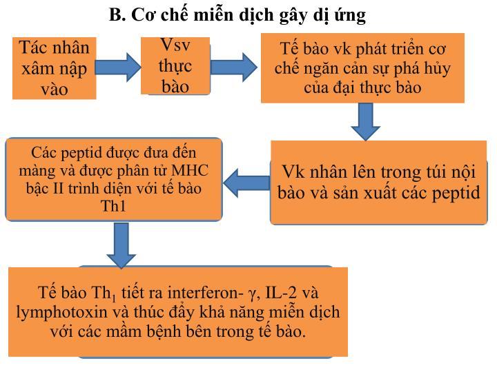B. Cơ chế miễn dịch gây dị ứng