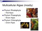 multicellular algae mostly