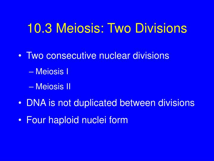 what are the two divisions of meiosis
