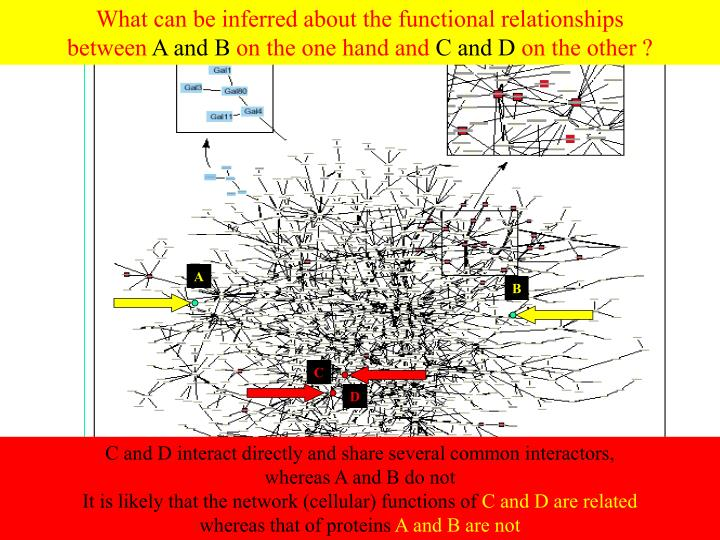 What can be inferred about the functional relationships