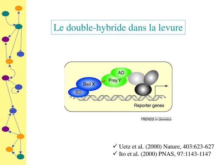 Le double-hybride dans la levure
