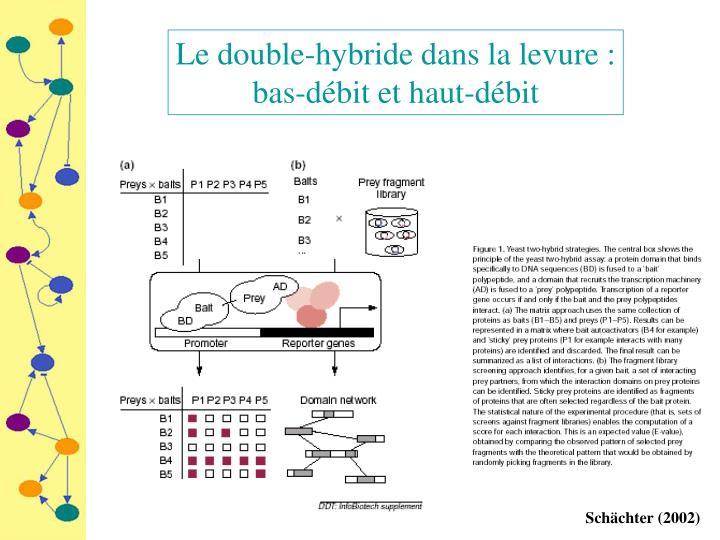 Le double-hybride dans la levure :